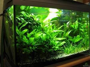 Aquarium Einrichten 60l : pflanzen im aquarium becken 60l aus becken 60l von ~ Michelbontemps.com Haus und Dekorationen