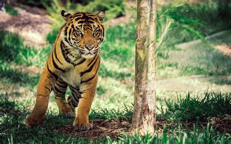 ranthambore tiger reserve wallpapers    hd