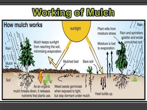 mulch planting