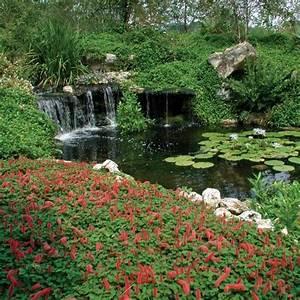 Things to do gainesville kanapaha botanical garden for Gainesville botanical gardens