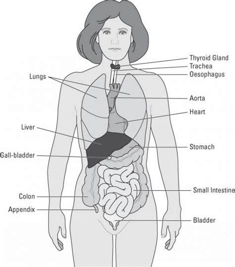 inside of the body diagram anatomy body list