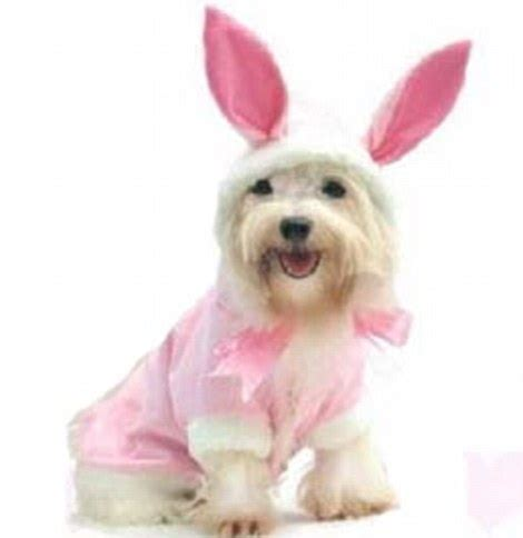dog fancy dress outfits  easter  sale   poor