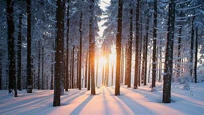 Forest Winter Snowy Wallpapers Wallpaperaccess Backgrounds Studio