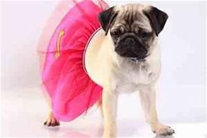 Welche Farbe Passt Zu Magenta : welche farbe passt zu pink so kombinieren sie einen pinken rock ~ Markanthonyermac.com Haus und Dekorationen