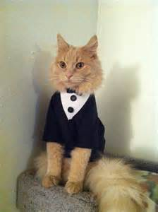 cat clothing tuxedo cat cat clothes by catclothing on etsy
