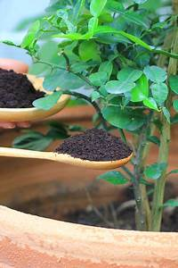 using coffee grounds to power your garden flowers plants