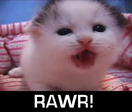 rawr pictures  images
