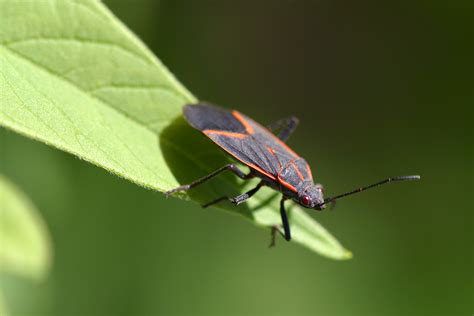 Tis The Season … For Nuisance Pests!