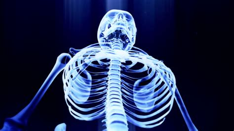 Royalty Free Human Skeleton Hd Video 4k Stock Footage And B