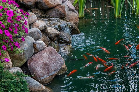 coy ponds pictures koi pond ii photograph by gene sherrill