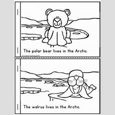 25+ Best Ideas About Arctic Animals On Pinterest  Kindergarten Winter Animals, Polar Animals