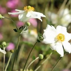 Magnolie Blüht Nicht : magnolien pflanzen und pflegen mein sch ner garten ~ Buech-reservation.com Haus und Dekorationen