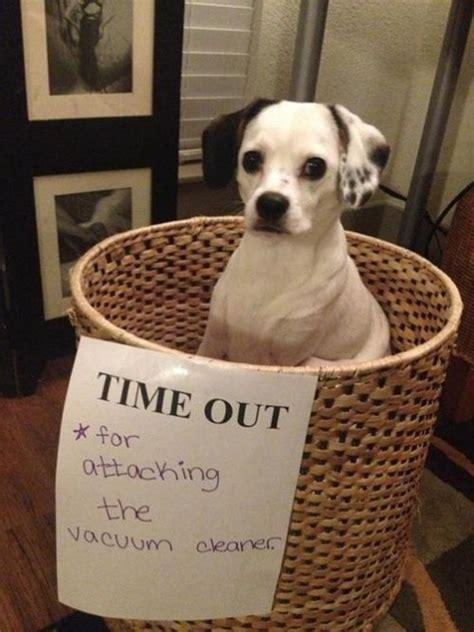 naughtiest dogs   world hilarious dog shaming