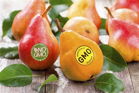 Are GM Crops Worth It?   JSTOR Daily