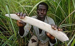 Warlord Joseph Kony uses ivory trade to buy arms - Africa ...