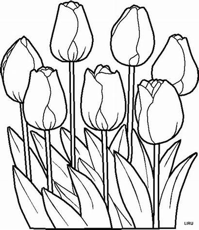 Dibujos Flores Plantillas Imprimir Tulipanes Colorear Dibujo
