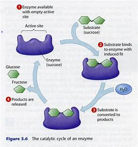 Sid Biochem Blog 2013
