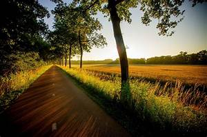 Field, Forest, Sunset, Nature, Road, Walk, Grass, View, Trees, Wallpapers, Hd, Desktop, And, Mobile