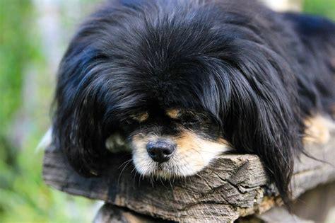 picture black dog portrait animal cute pet fur