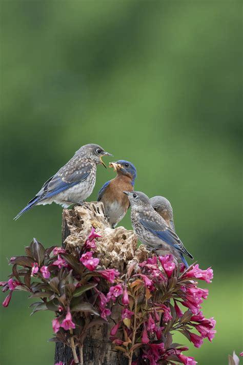 help nesting birds duncraft