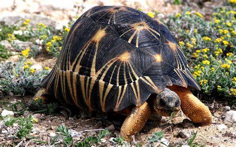 tortoise wallpapers uskycom