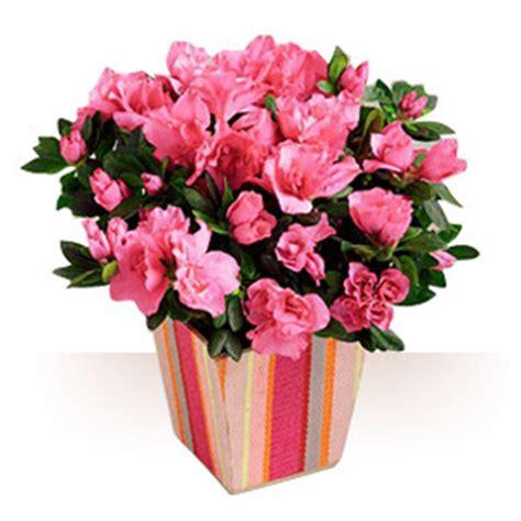 premium flowers 2011 01