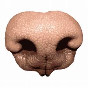 Dog Nose transparent PNG - StickPNG