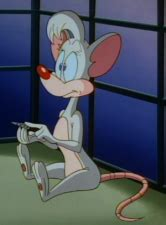 However, while they had their own series, they still sporadically appeared in animaniacs. Billie - Pinky and the Brain Wiki