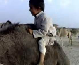 Kid Scared Camel