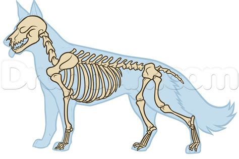 dog anatomy drawing step  step pets animals