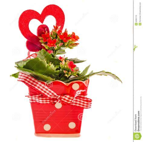 kalanchoe fleurit avec la forme de coeur dans