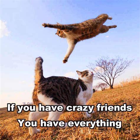 friends of cats friend memes images