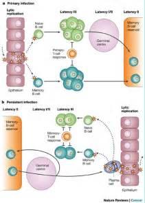 Epstein-Barr Virus Infection