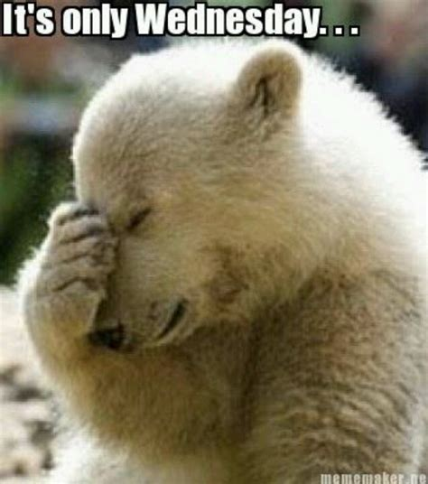 Wednesday Meme - funny animal wednesday quotes quotesgram