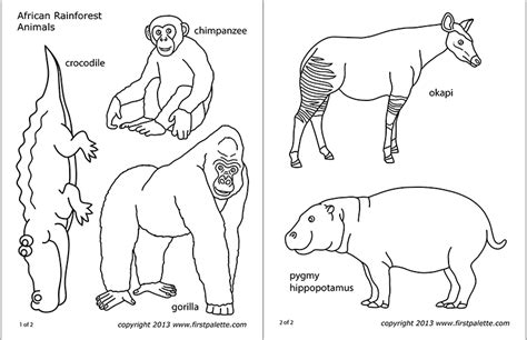 african jungle  rainforest animals  printable