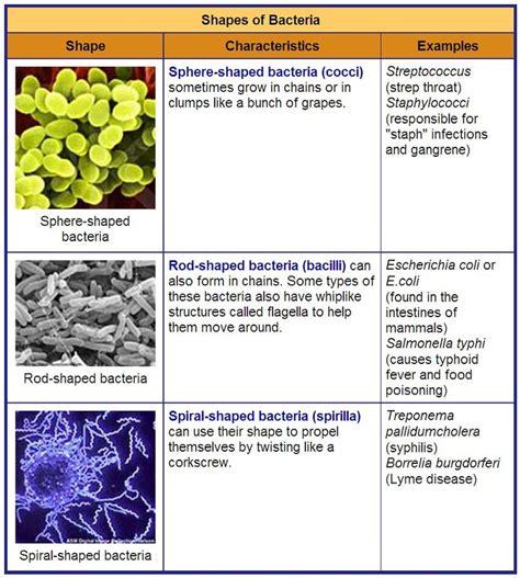 unicellular organisms rumney marsh academy science