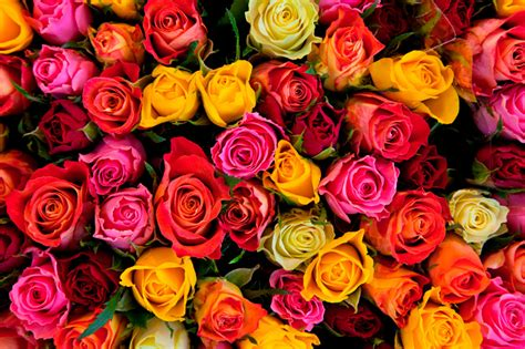 What Do The Different Colors Of Roses Mean?