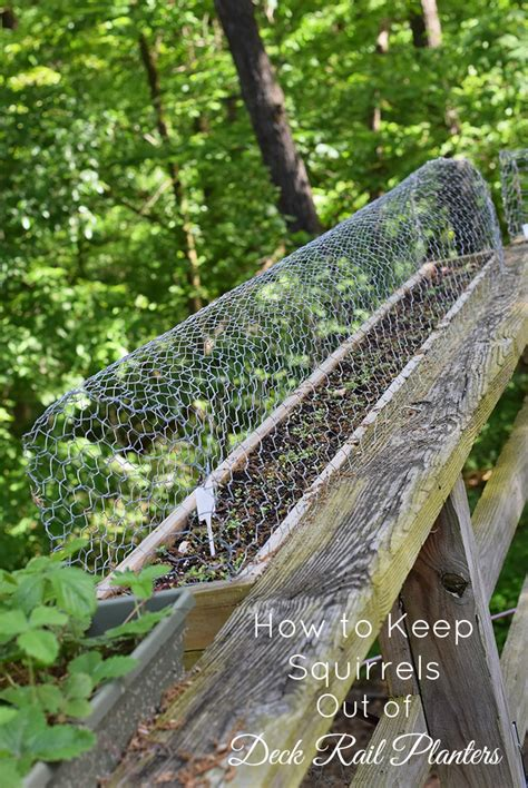 how to keep squirrels out of your garden keeping squirrels out of the garden bonnie plants how to