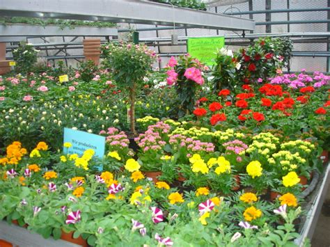 Gärtnerei, Fürth, Gärtner, Pflanzexperten, Garten