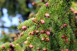 Schädlinge Im Garten : sch dlinge im garten sitkafichtenlaus nordhessen journal ~ Lizthompson.info Haus und Dekorationen