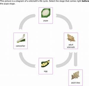 35 Cheetah Life Cycle Diagram