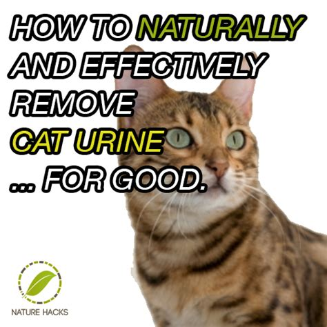 How To Naturally Clean And Remove Cat Urine Effectively