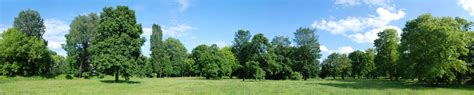 Background Images Of Trees by Trees0033 Free Background Texture Panorama Forest Line