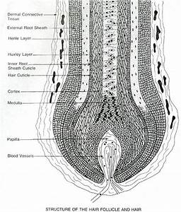 76 Best Images About Hair Science On Pinterest