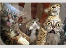 Lustige Katzenvideos und bilder Weltkatzentag 2013 Die