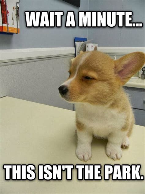 Dog At Vet Meme - 15 times dogs realized they were going to the vet instead of the park