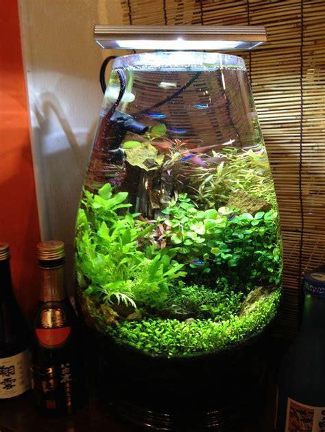 156 best images about planted nano aquariums on betta fish tank mini aquarium and