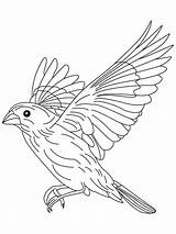 Coloring Canary Flight Bird Flying Drawing Grosbeak Birds Finch Draw Sparrow Printable Getdrawings Beowulf Colors Clip Popular Library Clipart Recommended sketch template