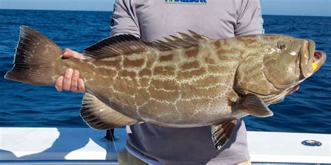 key west grouper fishing charter