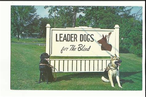 leader dogs for the blind service dogs images leader dogs photos wallpaper and